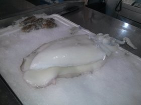 Sepia (cuttlefish) - Mercat Central