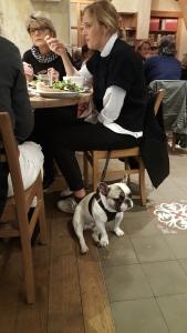 French bulldog at Le Pain Quotidien