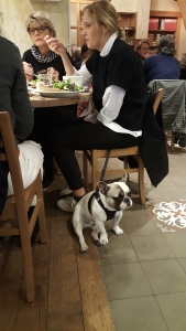 French bulldog at Le Pain Quotidien