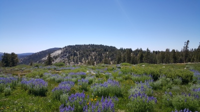 alpine-meadow-kah-yosemite